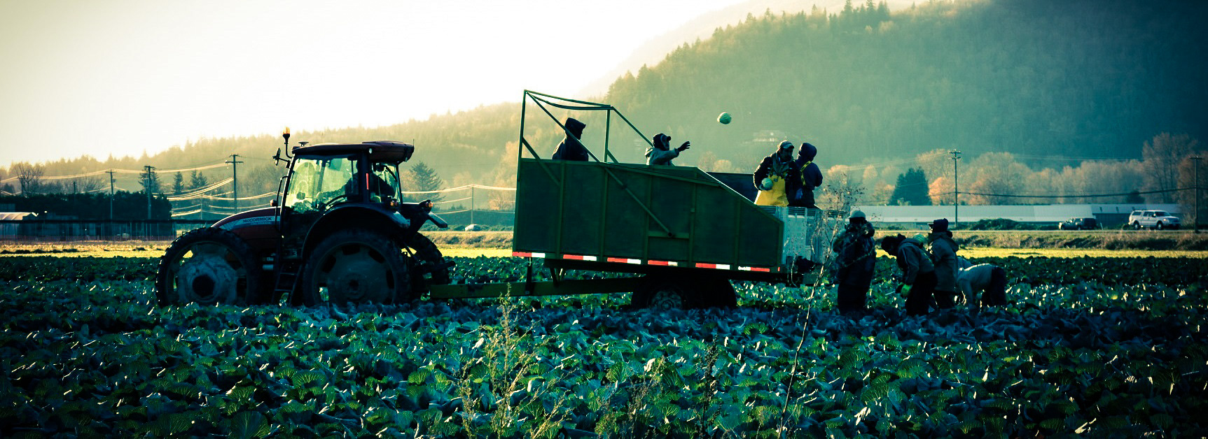 Photo of local grower Bajwa Farms located in Abbotsford BC